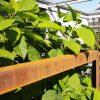 Tuinontwerper_Hovenier met moderne exclusieve tuinen met groen Tilburg_Den Bosch_Vught_Oisterwijk_Nijmegen_Utrecht_Bilthoven_Berlicum_Veghel_Uden_Eindhoven_073