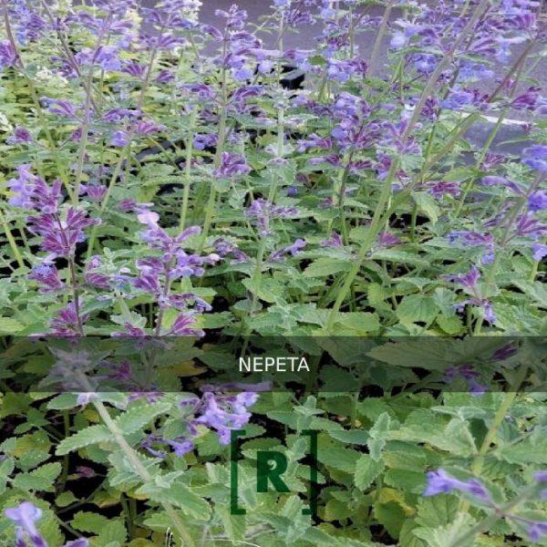 Tuinplanten_plantenbakken_terras_tuin_Hovenier met moderne exclusieve tuinen met groen Tilburg_Den Bosch_Vught_Oisterwijk_Nijmegen_Utrecht_Bilthoven_Berlicum_Veghel_Uden_Eindhoven_073
